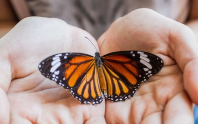 Letting Go of the Butterfly