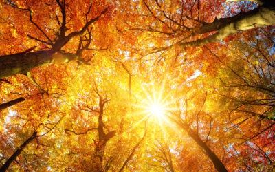 Transforming Light