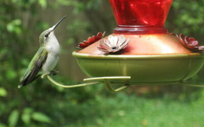 Lessons From a Hummingbird